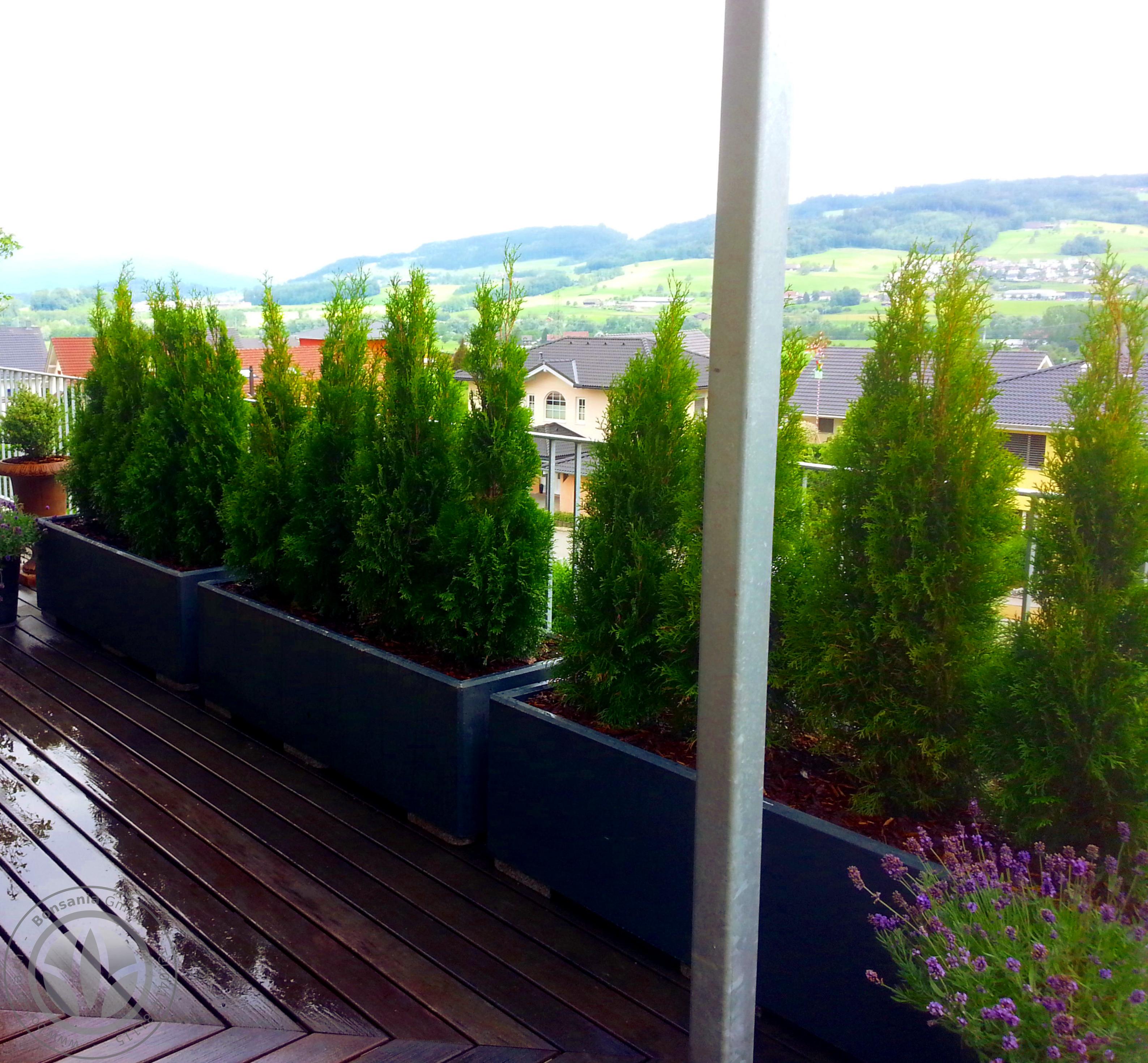 Bonsania Terrassenbepflanzung Mit Thuja Als Sichtschutz